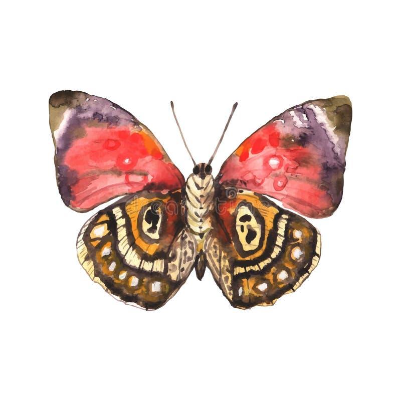 Bella farfalla macchiata dell'acquerello Vettore illustrazione di stock