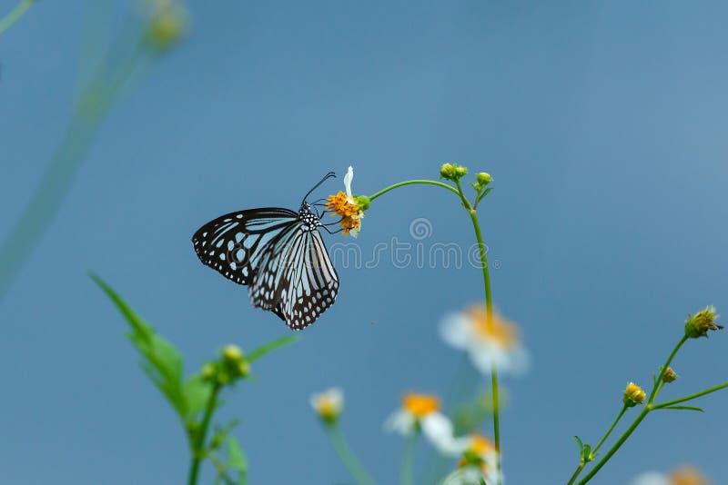 Bella farfalla sulla sfuocatura arancio del fondo del fiore fotografia stock libera da diritti
