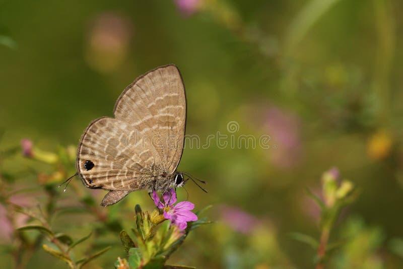 Bella farfalla variopinta in natura fotografia stock libera da diritti
