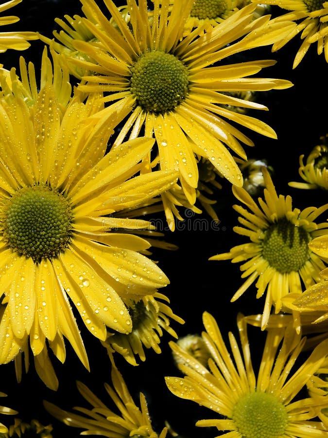 Bella fine floreale sull'immagine immagine stock
