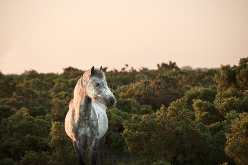 Bella fine in su di nuovo cavallino della foresta fotografie stock libere da diritti