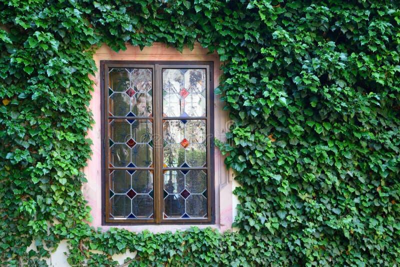 Bella finestra in una parete invasa dall'edera verde fotografie stock libere da diritti