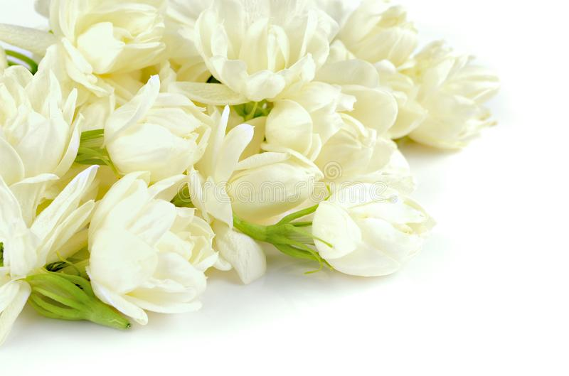 Bella fioritura bianca dei fiori del gelsomino fotografie stock libere da diritti
