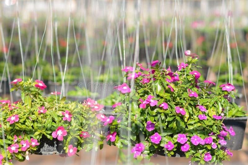 Bella fioritura nelle verdure saltate fotografie stock libere da diritti