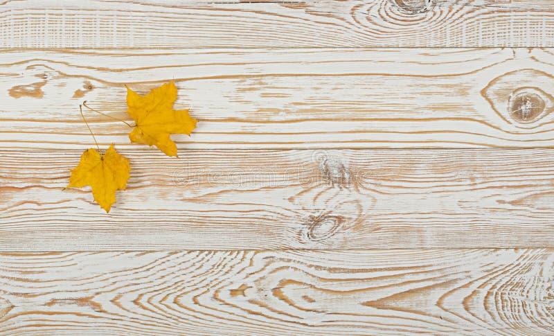 Bella foglia di acero asciutta su fondo di legno bianco fotografia stock libera da diritti