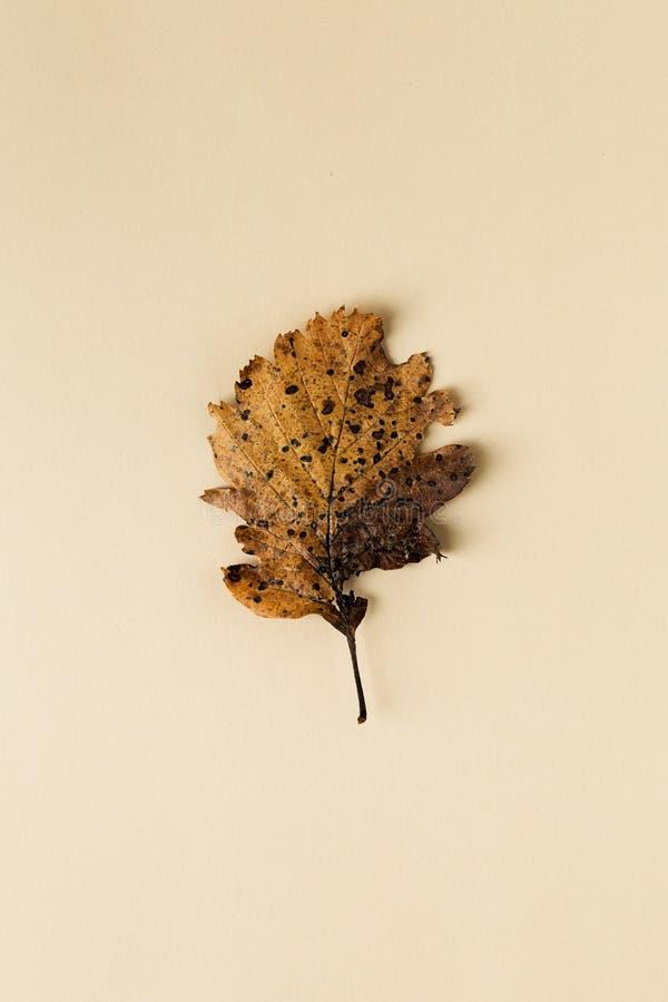 Bella foglia di autunno su fondo pastello fotografia stock