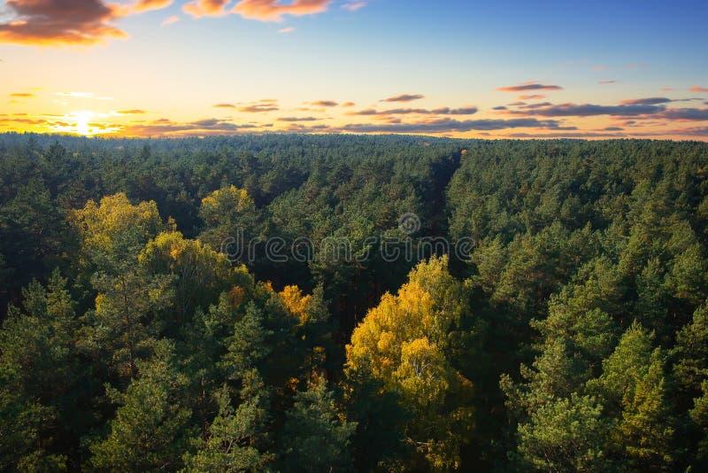 Bella foresta autunnale al tramonto immagini stock libere da diritti