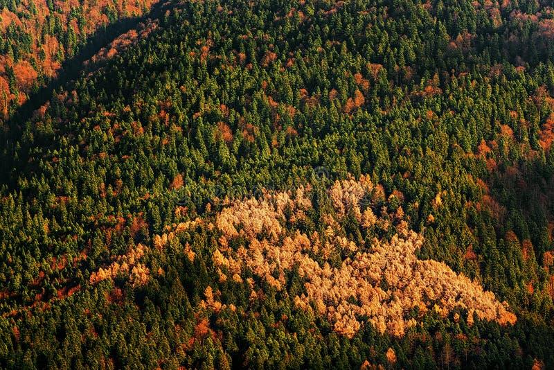 Download Bella foresta in autunno fotografia stock. Immagine di sunny - 30825674