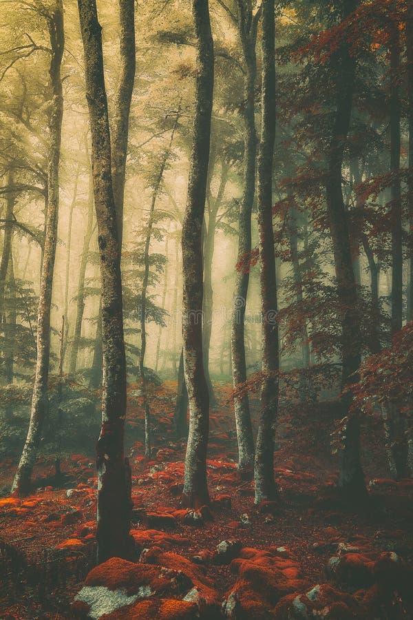 Bella foresta d'annata fotografia stock