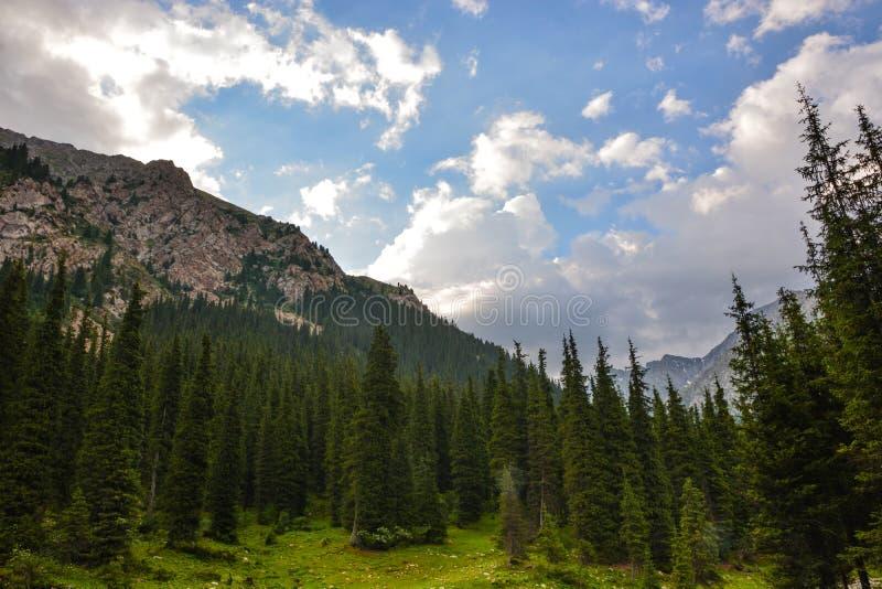 Bella foresta del paesaggio con le rocce, gli abeti ed il cielo blu in montagne del Kirghizistan fotografia stock