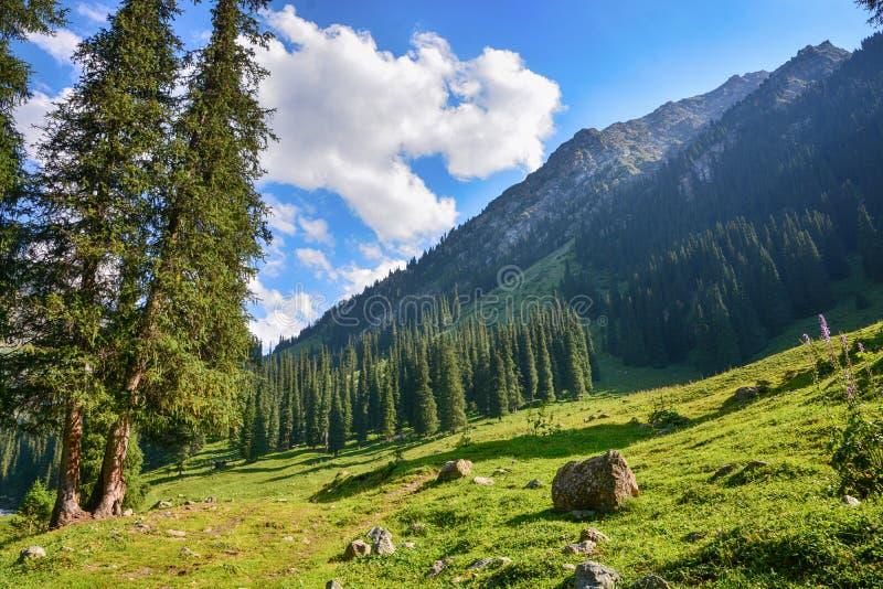 Bella foresta del paesaggio con le rocce, gli abeti ed il cielo blu in montagne del Kirghizistan fotografia stock libera da diritti