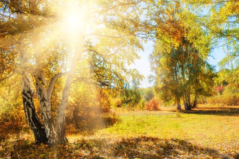 Download Bella Foresta Di Autunno Al Giorno Soleggiato Immagine Stock - Immagine di esterno, bellezza: 56891189