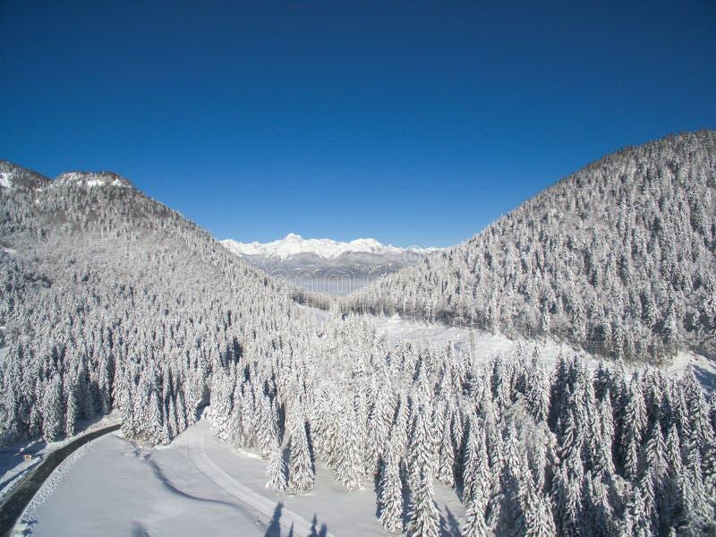Bella foresta di inverno di Snowy immagini stock