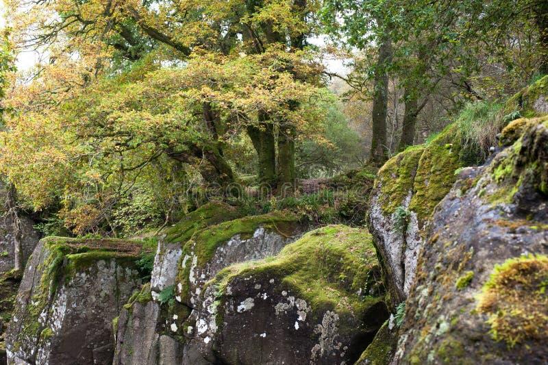 Bella foresta intorno alla cascata di Braklynn in Scozia immagine stock