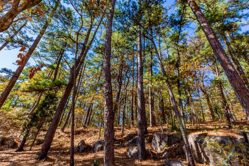 Bella foresta in Oklahoma fotografia stock libera da diritti