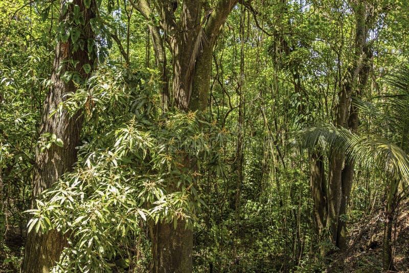 Bella foresta pluviale fotografia stock