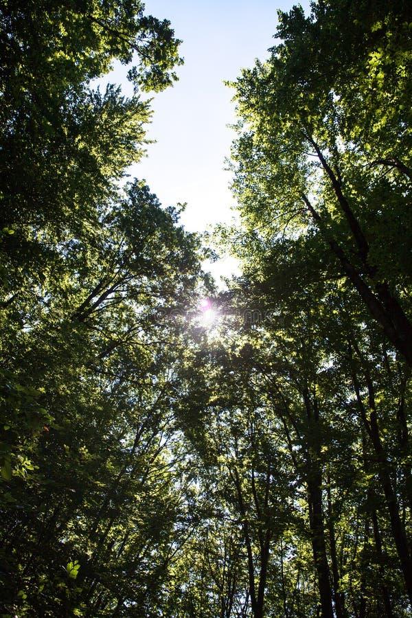 Bella foresta verde fotografie stock