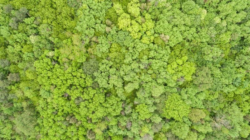 Bella foresta verde, fondo Vista superiore fotografia stock libera da diritti