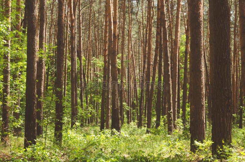 Bella foresta verde in primavera immagini stock libere da diritti