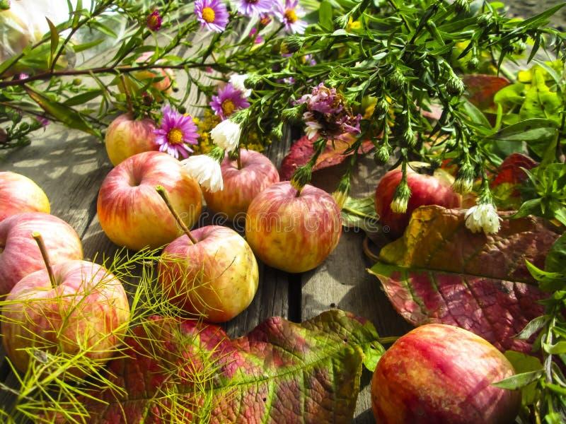 Bella foto con le mele, foglie rosse, fiori fotografia stock