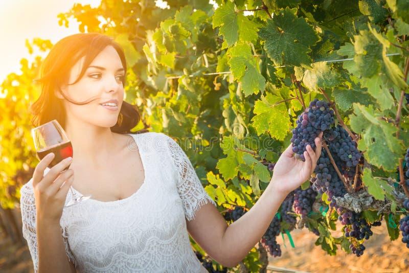 Bella giovane donna adulta che gode dell'assaggio del bicchiere di vino nella vigna immagini stock libere da diritti