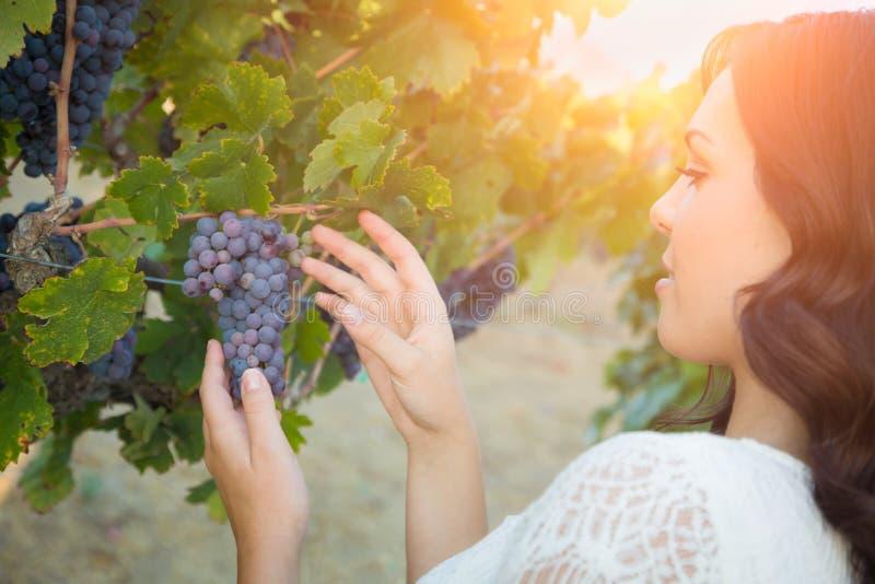 Bella giovane donna adulta che seleziona l'uva nella vigna fotografie stock