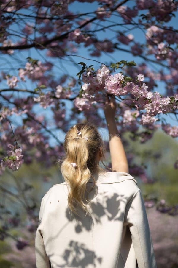 Bella giovane donna bionda nel parco di Sakura Cherry Blossom in primavera che gode della natura e del tempo libero durante lei c fotografie stock