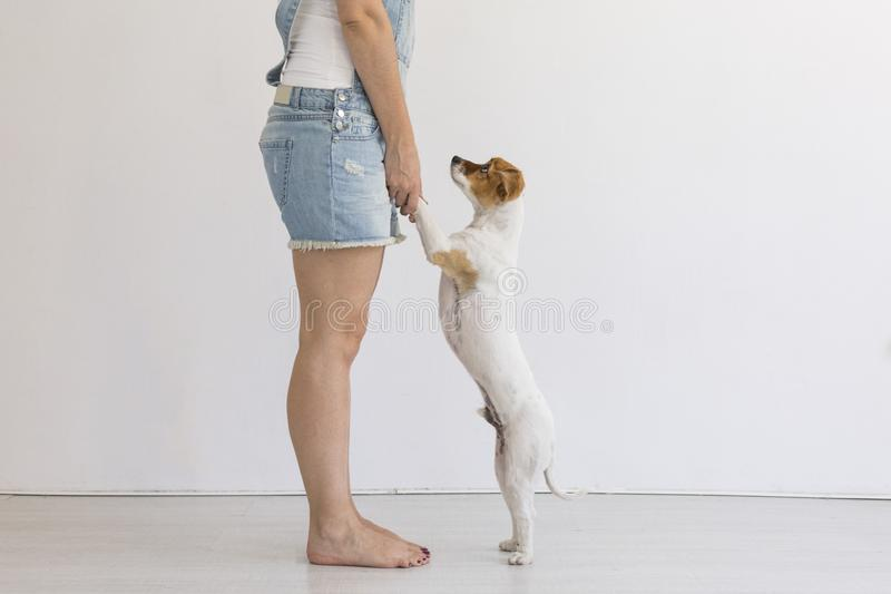 Bella giovane donna che gioca con il suo piccolo cane sveglio a casa Ritratto di stile di vita Amore per il concetto degli animal fotografie stock