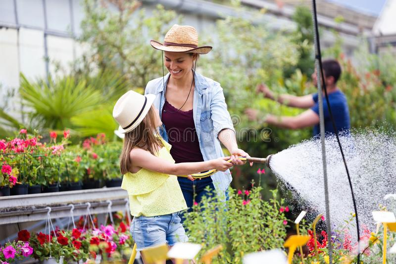 Bella giovane donna con sua figlia che innaffia le piante con un tubo flessibile nella serra immagini stock