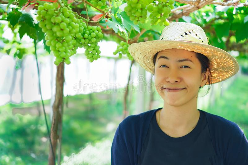 Bella giovane donna orientale che raccoglie l'uva nera all'aperto nella vigna fotografia stock libera da diritti