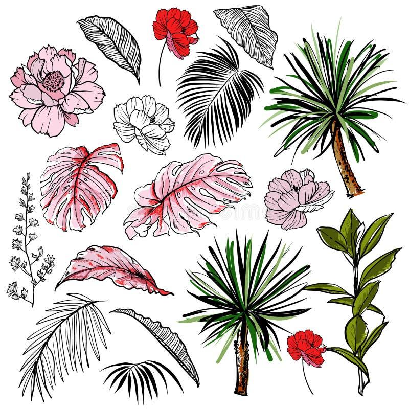 Bella illustrazione botanica disegnata a mano di vettore con le foglie ed i fiori tropicali Isolato royalty illustrazione gratis