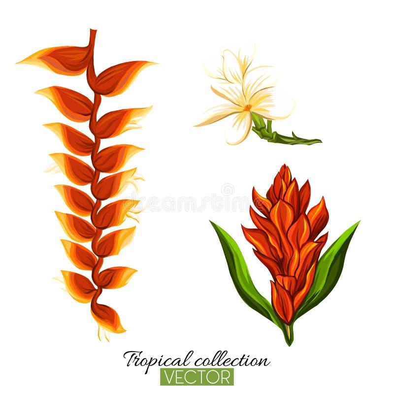 Bella illustrazione botanica disegnata a mano di vettore con strelitz royalty illustrazione gratis