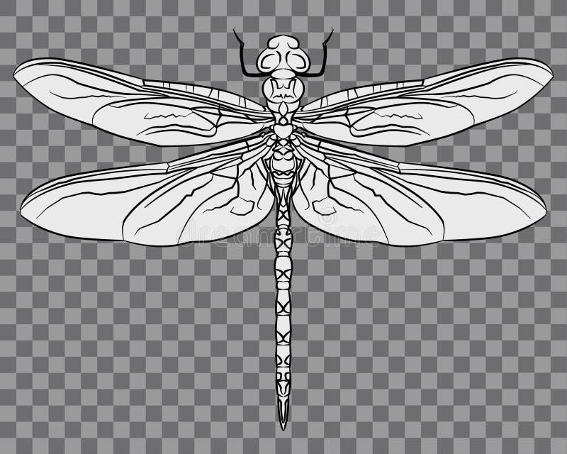 Bella illustrazione complessa del dettaglio della libellula illustrazione di stock