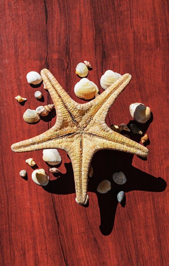 Bella immagine con una grande stella di mare circondata da molte coperture Stelle marine su fondo di legno Elementi del mare e de immagini stock libere da diritti