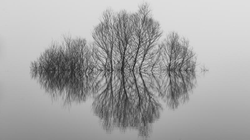 Bella immagine del paesaggio di un albero in un lago sommerso fotografia stock
