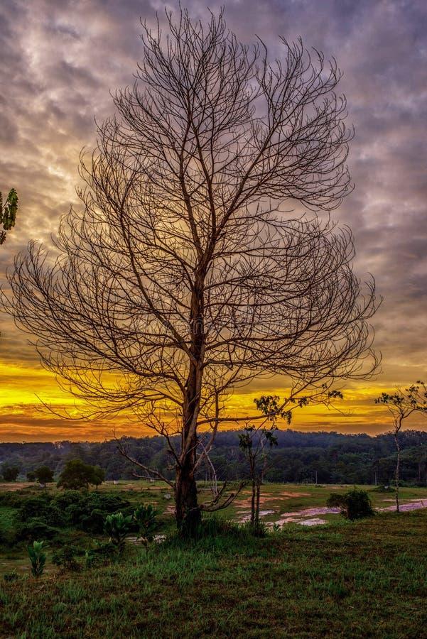 Bella immagine di paesaggio con la siluetta degli alberi fotografia stock libera da diritti