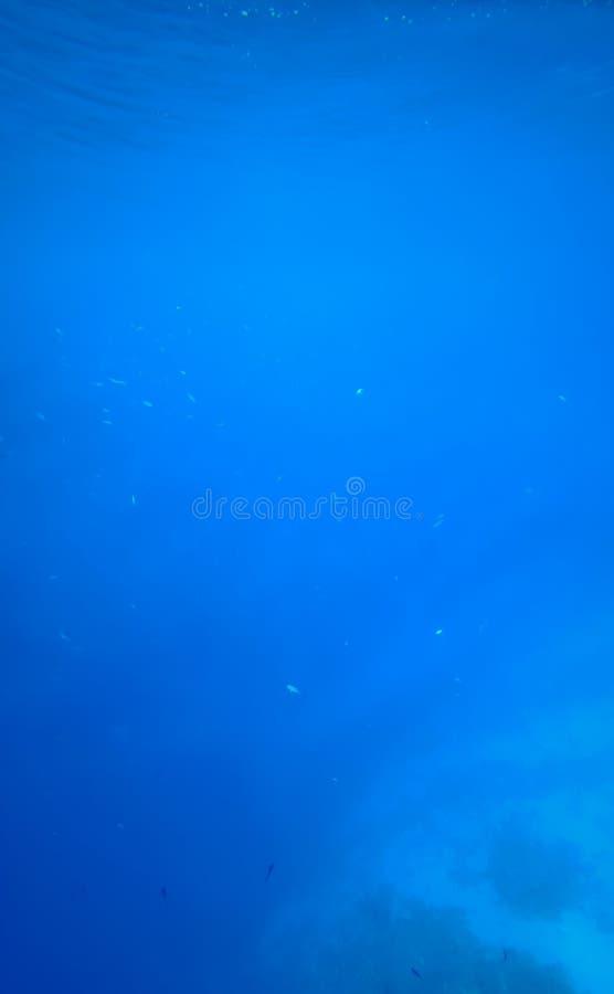 Bella immagine subacquea dei lotti dei pesci che nuotano nelle scuole intorno alla barriera corallina immagine stock libera da diritti