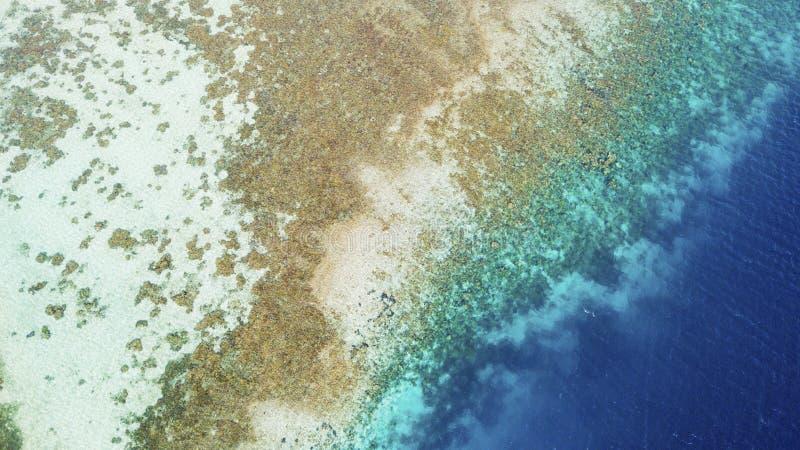 Bella linea costiera con le alghe brune fotografia stock