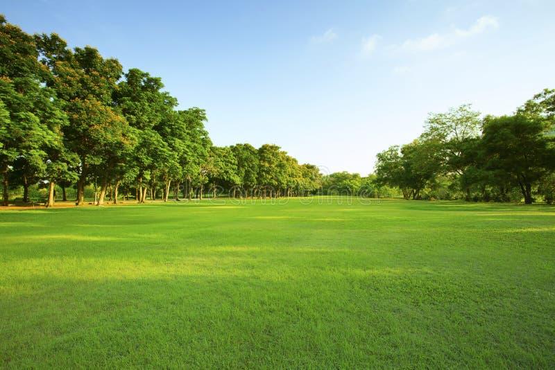 Bella luce di mattina in parco pubblico con il campo di erba verde fotografie stock