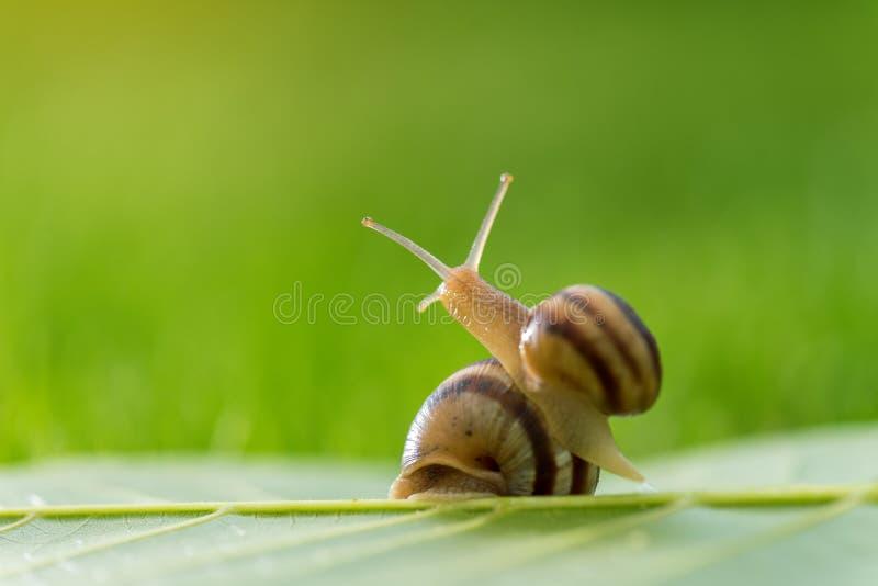 Bella lumaca adorabile in erba con la rugiada di mattina immagini stock libere da diritti