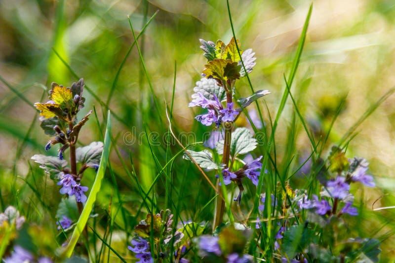 Bella macro dei wildflowers della molla fotografie stock