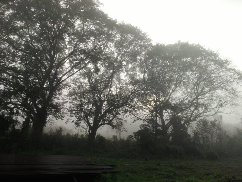 Bella mattina di paesaggio immagini stock libere da diritti