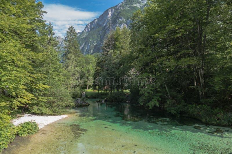 Bella montagna Forest Lake At Summer fotografie stock