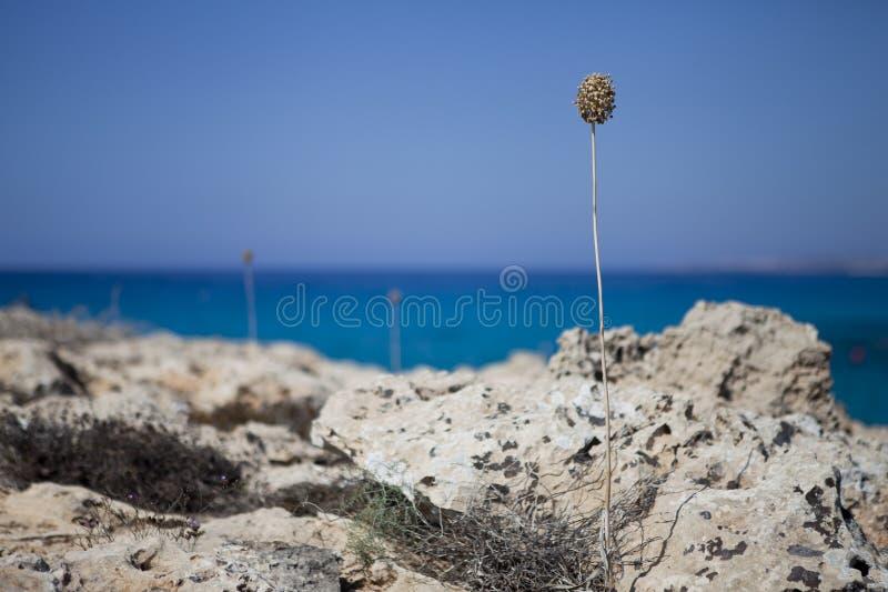 Bella natura dal mare fotografia stock libera da diritti
