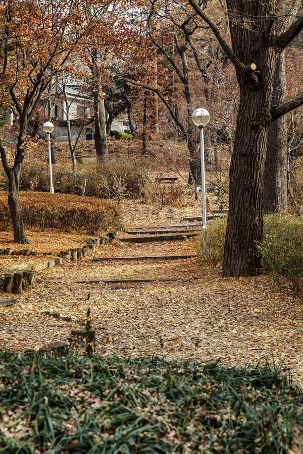 Bella natura nel parco di autunno Campus universitario a Seoul fotografia stock