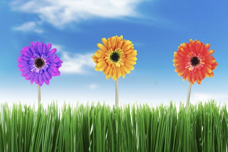 Bella natura in primavera fotografia stock libera da diritti