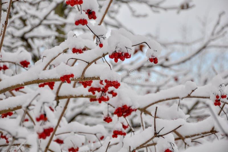 Bella neve sui rami dell'albero fotografie stock libere da diritti