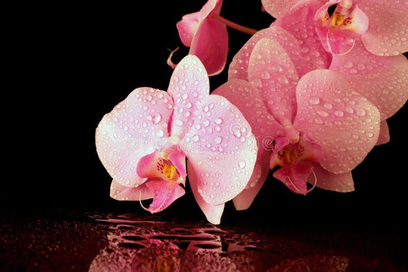 Bella orchidea dentellare immagine stock