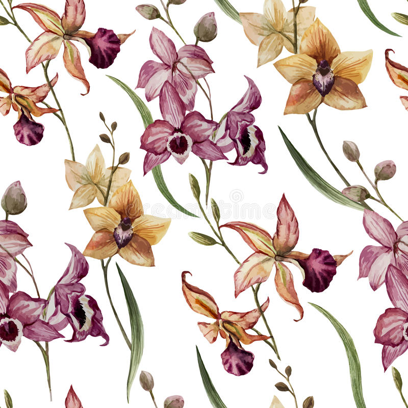 Bella orchidea flower8 royalty illustrazione gratis