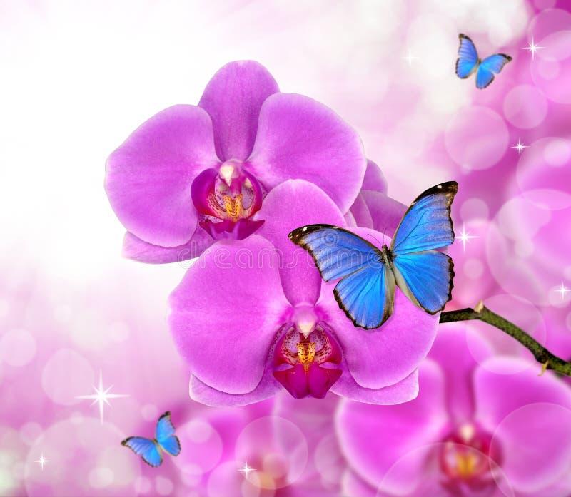 Bella orchidea porpora immagine stock immagine di for Orchidea fioritura